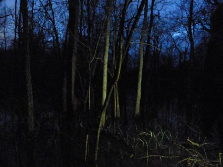 Spooky swampland at Black Bayou.